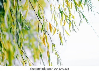 Spring nature background. Green leaves
