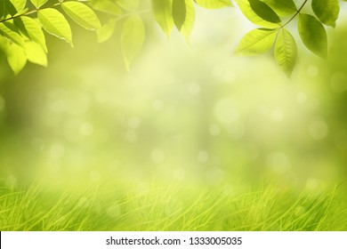Spring nature background, green tree leaves and grass, frame