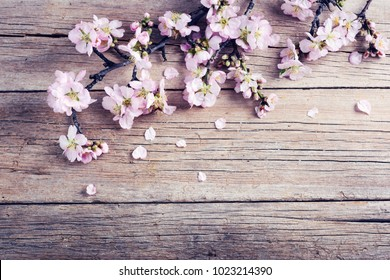 Spring nature background with pink blossom on old wooden desk. top view, banner.