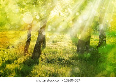Spring  nature background with sun beam / green landscape with sunshine/ Sunny forest early in the morning