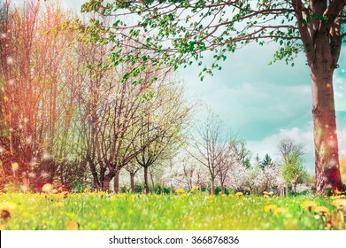 Spring nature background with tree blossom in garden or park