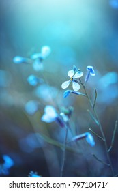 spring nature flower on blue background. Outdoor mystery vintage photo of beautiful wild meadow plant.