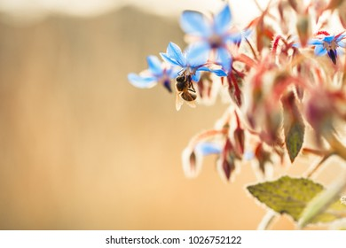 Spring. Nature flowers and bee