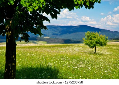 Spring nature meadow, landscape of White Carpathiens, Czech Republic