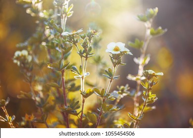 Spring nature. Meadow outddor wild meadow flowers. Macro