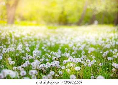 Spring Nature scene. Beautiful Landscape with dandelions, green grass and flowers. Tranquil Background, sunlight. Scenic beauty meadow backdrop