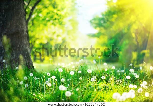 FrühlingsNature. Schöne Landschaft. Park mit Löwenzahn, Grünem Gras, Bäumen und Blumen. Ruhiger Hintergrund, Sonnenlicht. Landschaft mit grandioser Schönheit