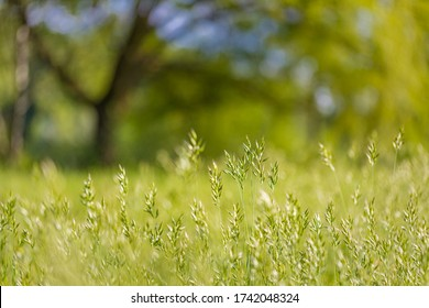 Spring nature scene. Beautiful meadow landscape with blurred park green grass, trees and flowers. Tranquil spring nature background, sunlight. Scenic beauty meadow floral backdrop
