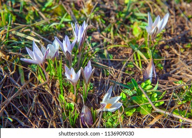 spring nature with wild flowers