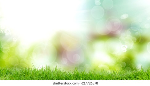 spring nature.beautiful background with young fresh green grass