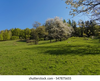 Spring on hill in Poland with blossoming trees