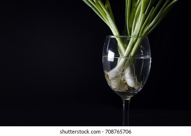 spring onion in glass and black background