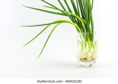 Spring Onion are in a glass with a white background./ Spring Onion on a white background.