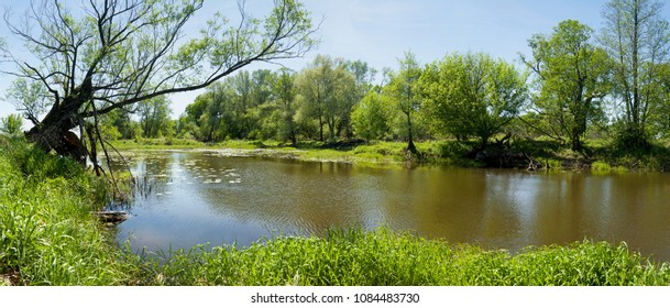 spring panorama of river and trees, landscape with willow