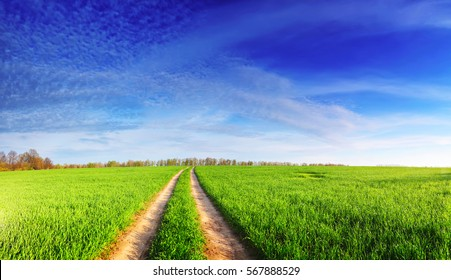 Spring panoramic landscape. Bright sun shines on green grass on meadow. Blue sky above wheat field with white fluffy clouds. Country road in field. Spring panoramic background.