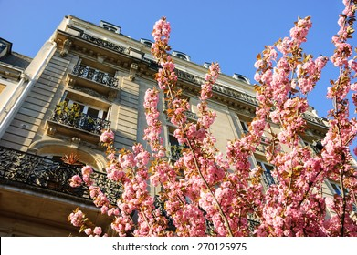 Spring in Paris. Typical Parisian building and blossoming pink tree.