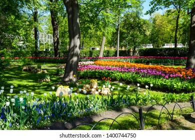 Spring park blooming tulip flowers landscape. Spring blooming tulip garden. Tulip festival in Saint Petersburg, Russia. Spring blooming tulip flowers landscape
