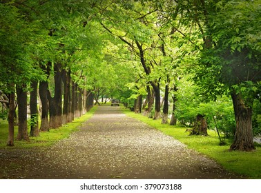 Spring park, green parkway, spring alley path, blossom trees, perspective, Vladivostok, Russia, spring scene