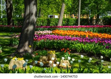 Spring park tulips blooming landscape. Tulip festival in Saint Petersburg, Russia. Spring blooming tulip garden. Tulips blooming in city park