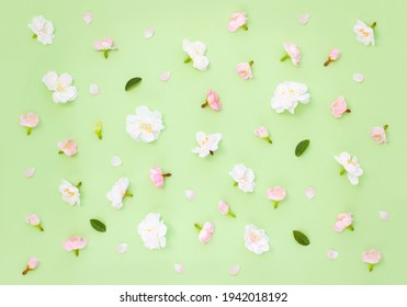 Spring pattern made of sakura flowers and petals on пgreen background. Template for wallpaper or playlist. Summer concept.