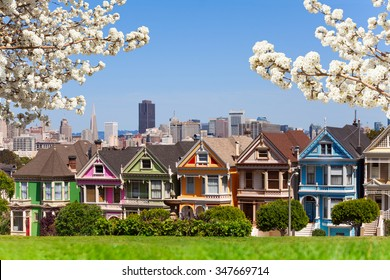 Spring photo of Painted ladies and San Francisco s
