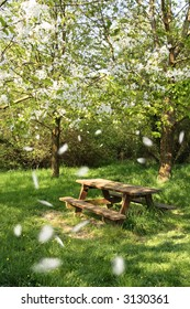 Spring picnic table under a blooming cherry tree, with flying petals.