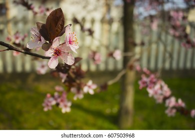 Spring pink blossom and copy space