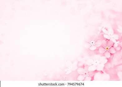 Spring pink forget-me-nots flowers, pastel springtime background, selective focus, toned