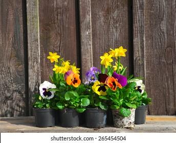 Spring planting garden wood