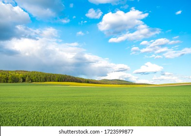 Spring at the polish fields