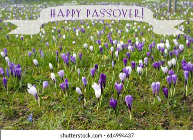 "Spring postcard with congratulations ""Happy Pesach"", kosher for the Passover"