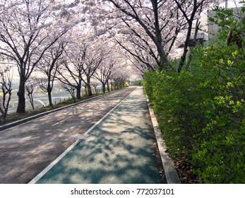 Spring promenade with flowers blooming and forsythia