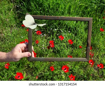 Spring red flowers blossom. Wild anemones blooming on a green meadow on sunny day. Men hand holds a wooden frame, symbolically framing small area of nature. Butterflies fly. Environment protection