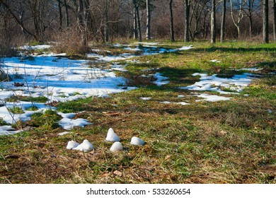 Spring, remnants of snow in the woods.