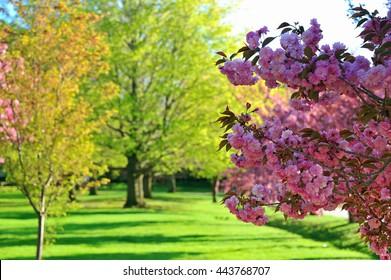 Spring at Reservoir, Boston