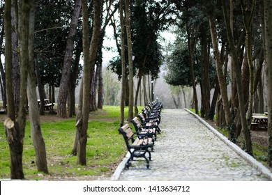 spring road in the park. View of the park from Besiktas district. Landscape of a beautiful park in the spring. (Yildiz Park) Istanbul - TURKEY