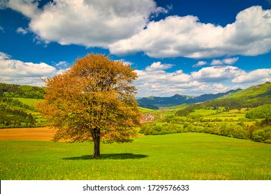 Spring rural landscape with a lonely tree on a grassy meadow in a foreground. National Nature Reserve Sulov Rocks, Slovakia, Europe.