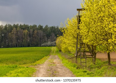 Spring scene in countryside. A path leading towards a forest, surrounded by trees with fresh green  leaves. Hunters outpost hidden among trees. Dark cloudy sky. Fresh air.