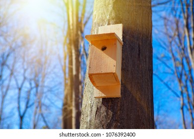spring scenery with bird nesting box attached to a tree trunk