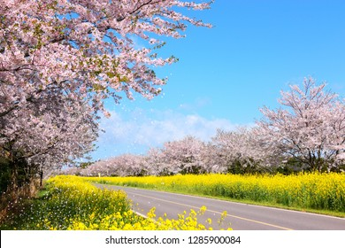 "It is spring scenery of ""Noksan Road"" in Jeju, South Korea."