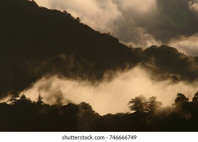Spring Scenery of Wanyuan in the Trails 124K of Taroko National Park,misty pine tree in cloudy forest is the Taiwan aesthetic far reaching sense.
