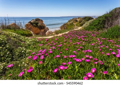 Spring seascape Albufeira beaches. Flowers in the foreground.