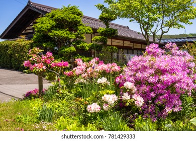Spring season with beautiful flowers blooming over around at Japan.