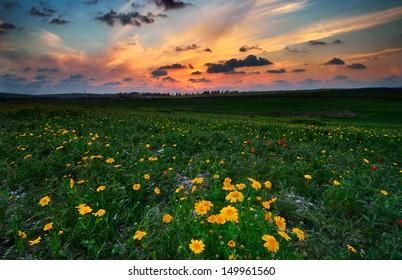 Spring season in northern Israel