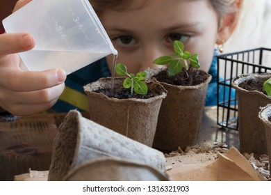 Spring seedlings. Young shoot. a little girl watering seedlings that grow from fertilized soil in peat pots. A small plant on a wooden table
