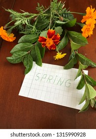 Spring, set with plants