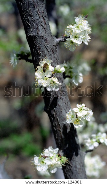 Spring shot
