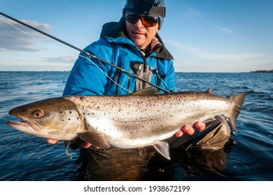 Spring silver sea trout caught on the fly rod