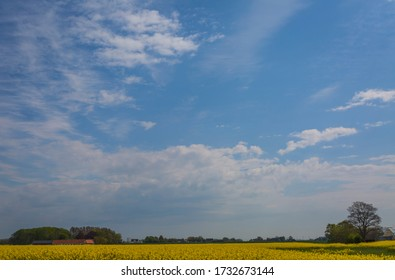 The spring sky with clouds over a canola field