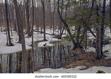 spring snow melting in the forest on blue sky background at Sunny day